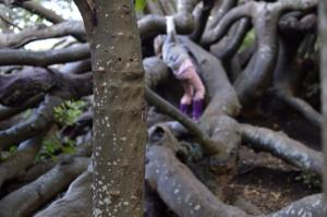 Tree Refugium